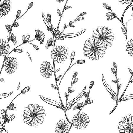 Detailed hand drawn black and white illustration seamless pattern of chicory flower, leaf. sketch. Vector. Elements in graphic style label, card, sticker, menu, package