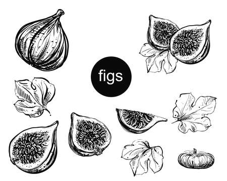 Detailed hand drawn ink black and white illustration set of figs, leaf, dried fig. sketch. Vector eps 8 Vettoriali
