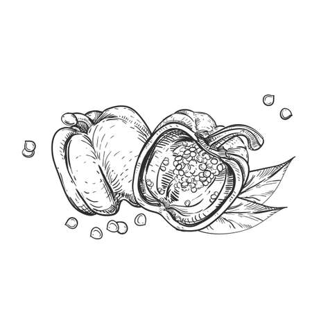 Hand drawn sketch black and white of pepper, leaf, slice, seeds. Vector illustration. Elements in graphic style label, card, sticker, menu, package. Engraved style illustration.