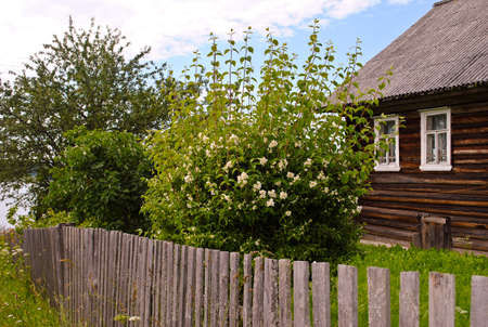 unpainted: Jasmine bush behind the fence and unpainted wooden house Stock Photo