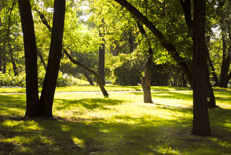 Evening sun and trees with green bright leaves in the park