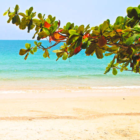 deciduous tree: Deciduous tree branch with green and orange leaves close. Asian beach and sea with turquoise water