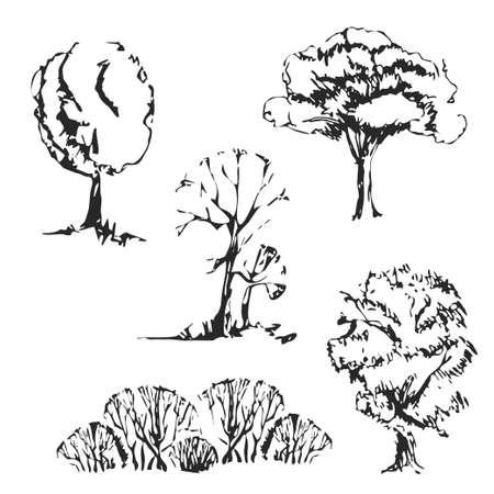 arbol roble: Dibujado a mano árboles establecidos. Los árboles aislados y de época boceto.
