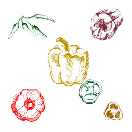 Vintage ink hand drawn set of different peppers, isolated on white background. Stock Photo