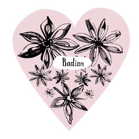 Anice stellato o schizzo disegnato a mano di badiana Oggetto di sapore e spezie stile inciso.