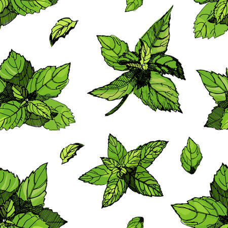 Seamless pattern with mint. Mint vector drawing illustration, isolated on the white background. Collection of twigs and mint leaves. Herbal engraved style illustration. Detailed organic product sketch. Cooking spicy ingredient