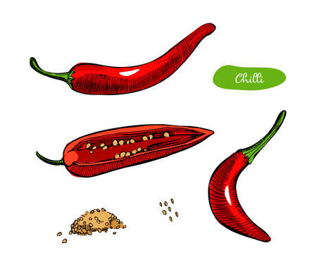 Chilli pepper hand drawn vector illustration.Vintage ink hand drawn peppers, isolated on white background.Engraved style spice. Cooking ingredient. Vetores