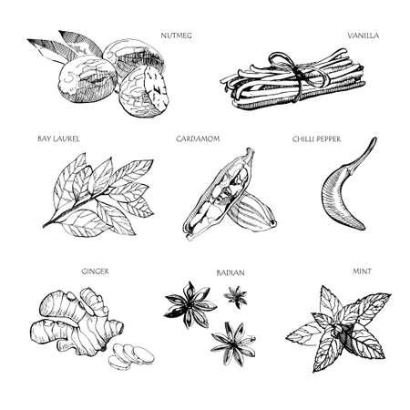 Épices dessinées à la main. Vanille et poivre, cardamome et badiane, noix de muscade et feuilles de laurier, menthe et gingembreSketch herbes de cuisine ensemble de vecteurs isolés. Illustration de l'herbe et des épices pour la cuisine.