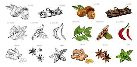 Épices colorées dessinées à la main. Vanille et poivre, cardamome et badiane, noix de muscade et feuilles de laurier, menthe et gingembreSketch herbes de cuisine ensemble de vecteurs isolés. Contour et version colorée Vecteurs