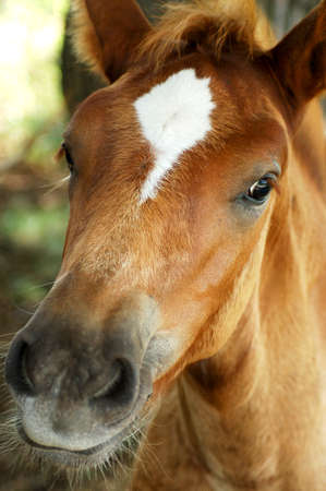 Little curious foal looks into the camera Stock Photo