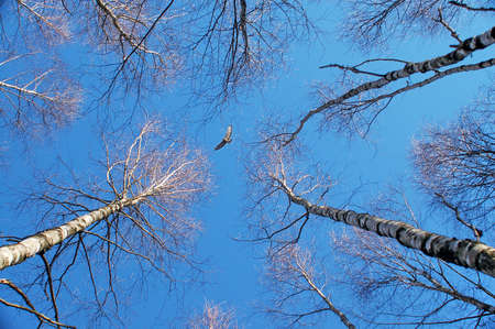 View of the sky between the trees in spring forest