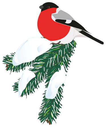 Vector image of a bullfinch on a snowy spruce branch.