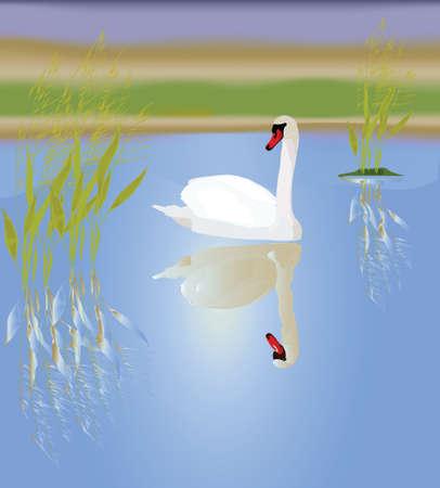 Ein wei�er Schwan in einem malerischen See. Vektor-Illustration.