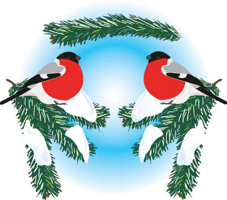 A seamless vector picture of bullfinches on snowy spruce branches. Illustration