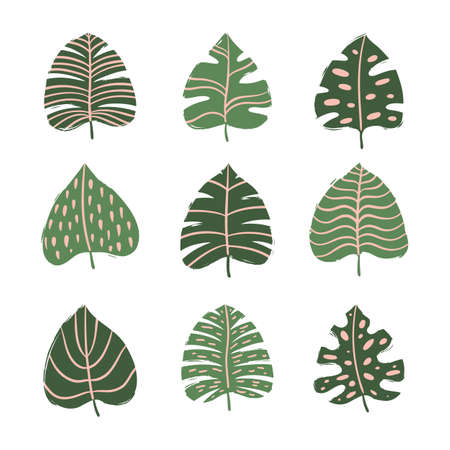 Set of tropical leaves. Hand drawn vector elements Illustration