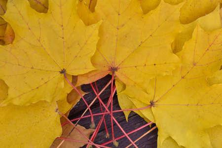 Fallen yellow maple leaves on a park bench, autumn season, closeup Stock Photo