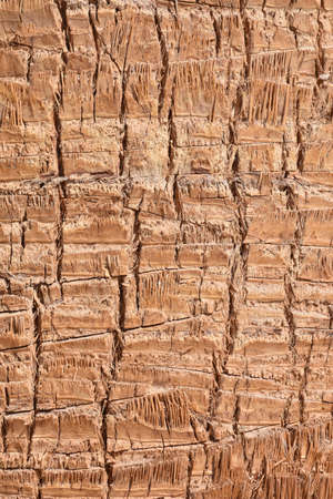 Background texture brown palm tree trunk Imagens