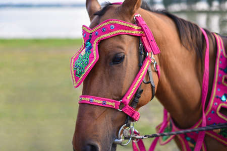 Decorated harness on the horse head at the holiday.
