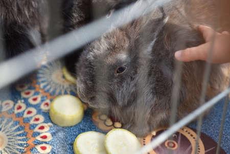 Children play with a rabbit in a cage. Zdjęcie Seryjne