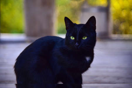 Black cat sits on a wooden porch of the house.