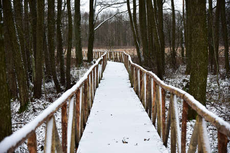 Wooden path through a winter swamp.