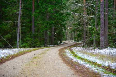 Curved road in the winter forest. Фото со стока - 137790741