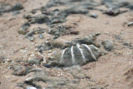 Petrified ancient shell lies on the seashore. Stockfoto