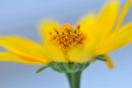 The stamens and pistils