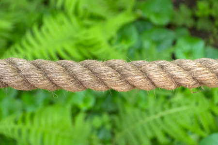 Horizontally stretched thick rope made from natural fiber close-up against a background of green plants Imagens