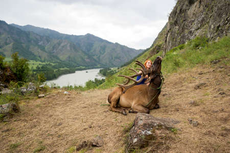 A young red-haired girl dressed in sports clothes stroking the horns and skin of a deer maral who lies on a mountain tied with a bridle in the mountains of the Altai Stockfoto