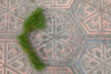 Top view of the paving slabs in the form of a rhombus with green grass making its way across the street. Nature conquers people.