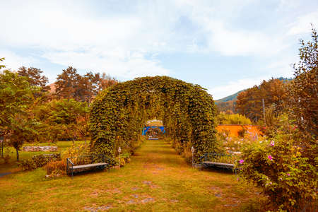 Large semicircular arches of green yellow plants with leaves standing in a row in the form of a road or path in a flowering garden on autumn. Wedding and designer jewelry.