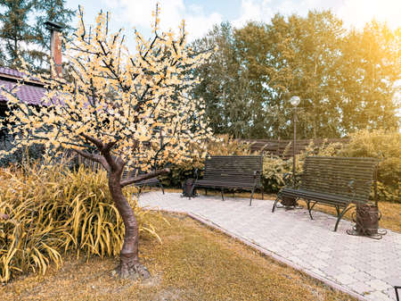 Blooming garden in the courtyard of a country house with a two wooden bench near green and yellow trees with flowers on autumn fall day. Parks and outdoors recreation.