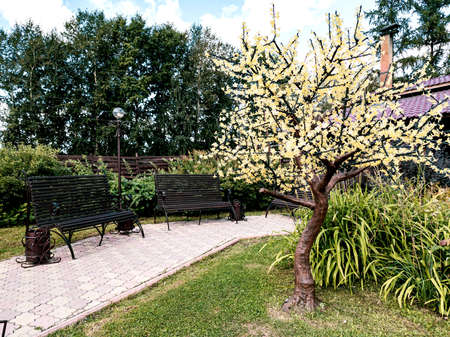 Blooming garden in the courtyard of a country house with a two wooden bench near green tree with flowers. Parks and outdoors recreation.