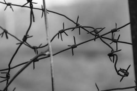 Close-up of a metal fence with an iron barbed wire on a gray background. Detention centers with controlled isolation and maximum security prisons.
