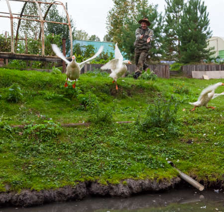 A male farmer in a camouflage suit and a straw hat runs, smiling and clapping his hands, and herds white geese and ducks into a pond on a farm yard covered with green grass.