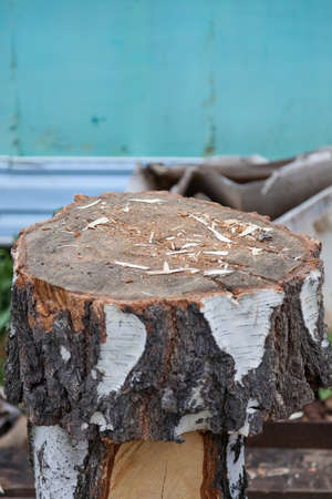 A wooden block from a sawn birch trunk as a chock or stand for chopping wood with chips and sawdust in a rustic style. Archivio Fotografico