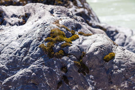 The gray stone bank of the river is covered with green moss on a summer day. Natural natural design material.