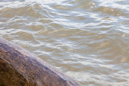 Close-up of a submerged tree trunk washed ashore in summer in the river.