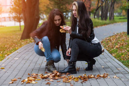 Two young women collect fallen leaves in the park, squatting on the sidewalk against the backdrop of yellow trees for crafts and herbarium.