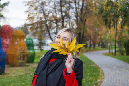 A young blonde woman with blue eyes in a red coat and a black scarf posing in an autumn park against a background of colorful trees covering her face with yellow leaves. 版權商用圖片