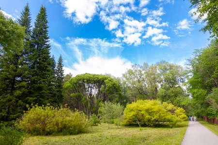 Hello sunshine - forest nature garden summer stock pictures, royalty-free photos & images. Fresh meadow landscape. Novosibirsk botanical garden