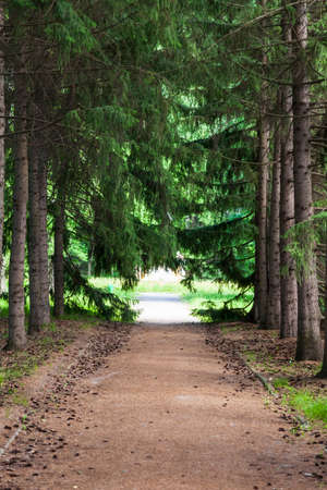 Botanical garden with large beautiful spruce trees and a walking path.