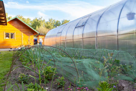 Conception of summer, gardening, healthy food and eco products. The small greenhouse with growing tomatoes and cucumbers in the garden with green vegetation on a sunny summer day.