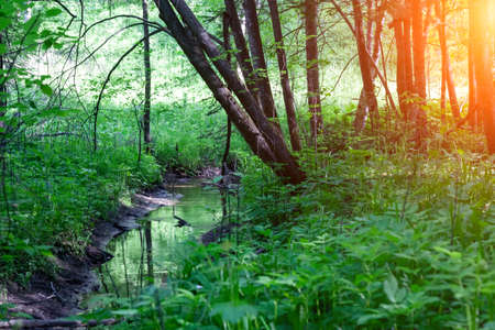A stream running through a beautiful woodland park in russia novosibirsk on a sunny Spring afternoon. Stock fotó