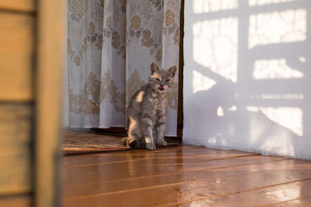 grey tabby: Grey tabby cat sitting on a porch of a house in the village during the daytime in the summer. Stock Photo