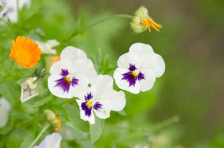 beautifu: beautifu lflowers