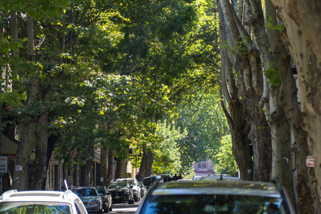 Green Street with tall trees in the center of Tbilisi, Georgia. Lizenzfreie Bilder