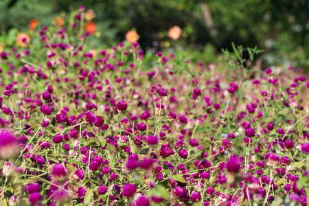 Clover glade in the Botanical Garden near Batumi, Georgia. Banco de Imagens