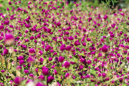 Clover glade in the Botanical Garden near Batumi, Georgia. Standard-Bild